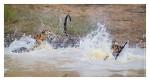 Tiger6470-Nov28-2010
