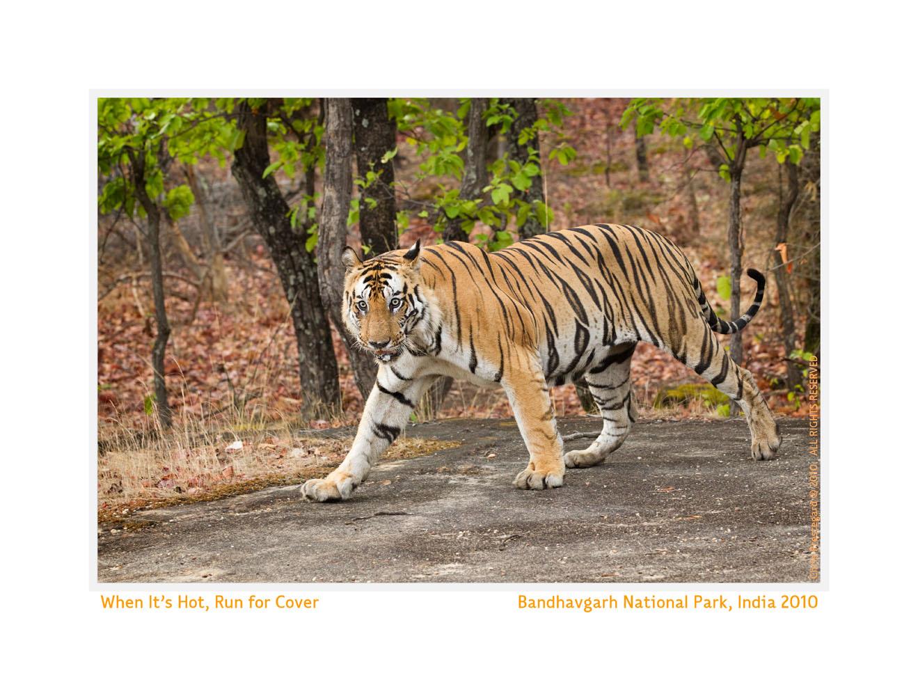 TigerB2-7920_Jun12-2010