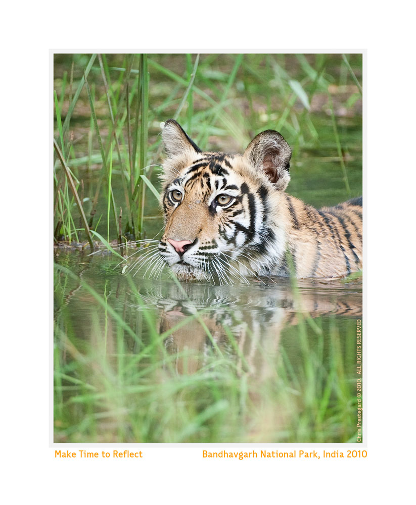 TigerCub8551b-June15-2010
