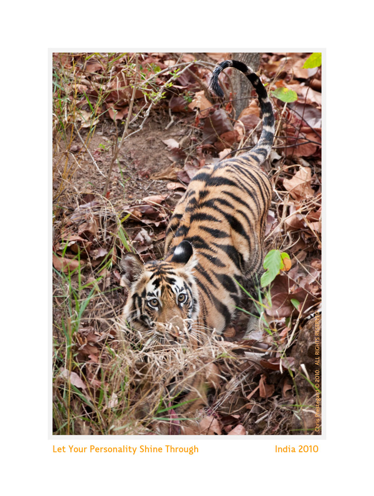 TigerCub8751-Oct5-2013