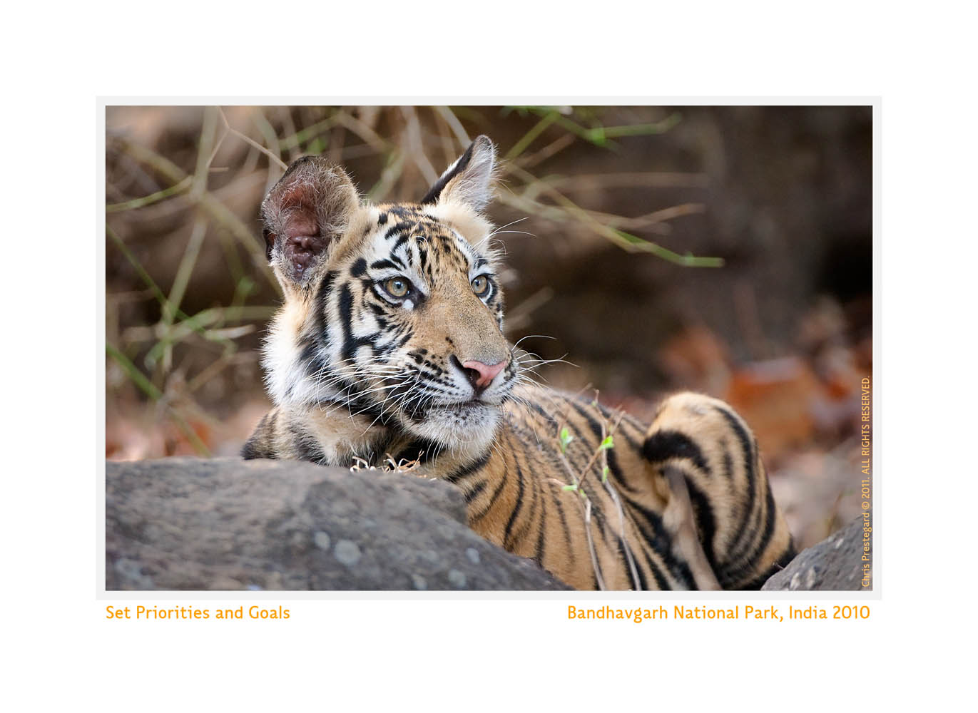 TigerCub8925C_May26-2011