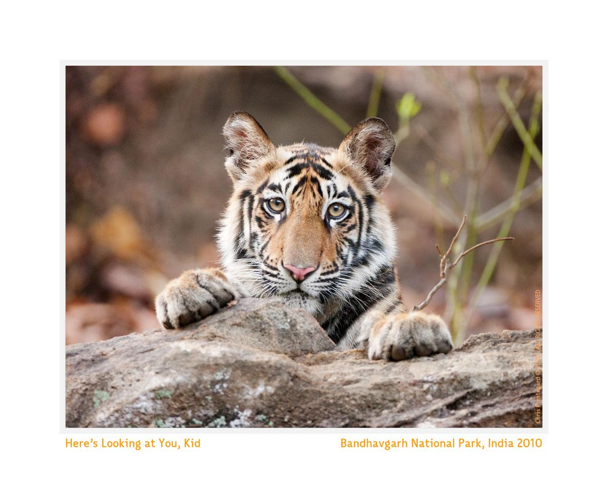 TigerCub9050g_Jun12-2010