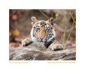 TigerCub9050g_Jun12-2010