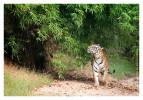 TigerMirch9833_Jan22-2012