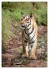 TigerMirch9863_Jan20-2012