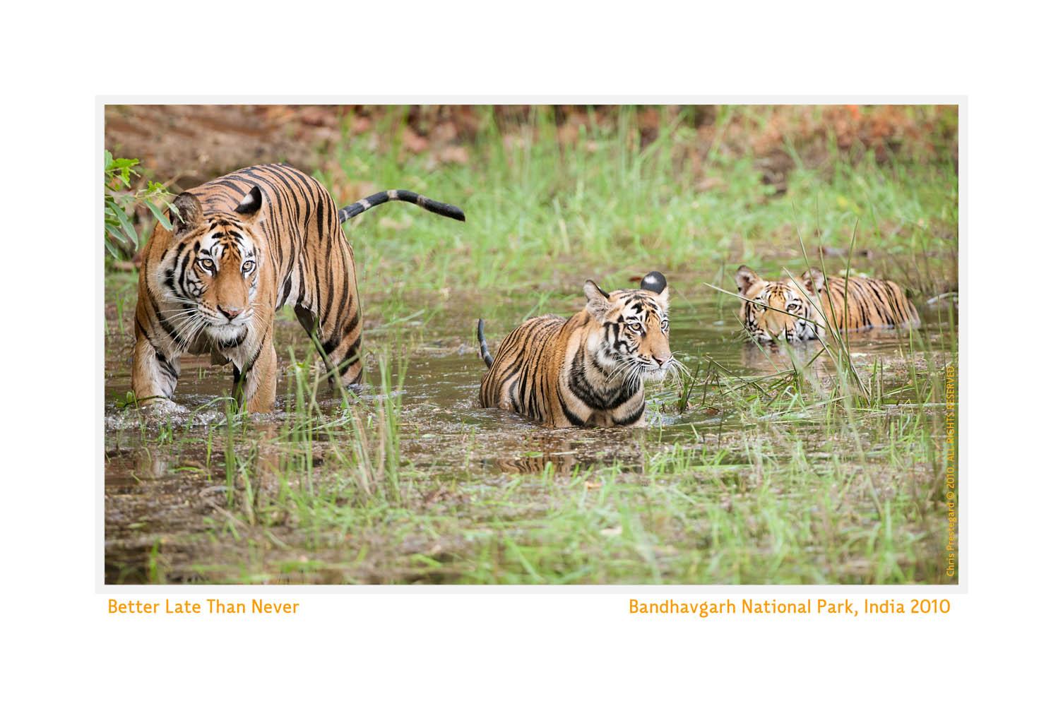 TigerMomCub8510-Aug4-2012