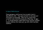 WH-BornFree