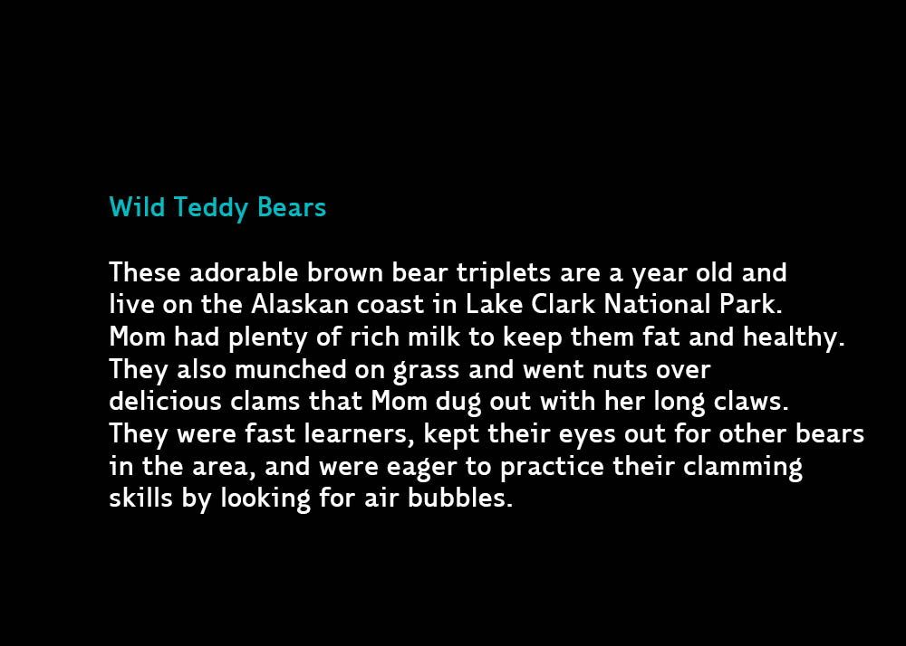 Wild-teddy-bears