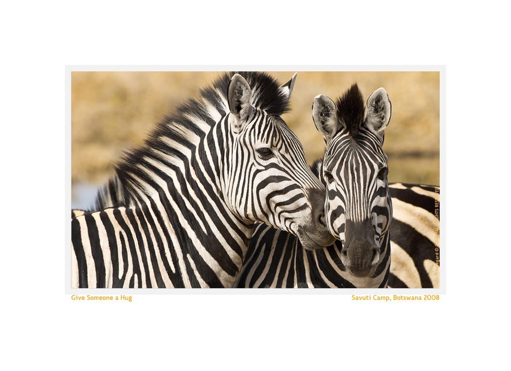 Zebra4188MIntro_Feb15-09