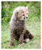 cheetah2789-Apr7-2014