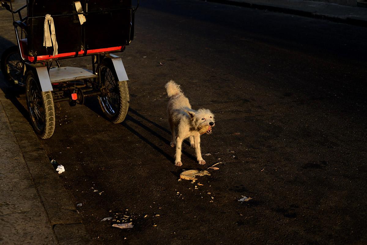 Cuba  © Tracey Nearmy