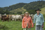 Beef Cattle Farmers - Daintree Qld © Brian Cassey