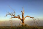Atherton Tablelands - Australia  © Brian Cassey