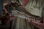 Darwin, Australia © Dan Himbrechts