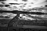 Puerto Natales, Chile © Sam Mooy