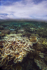 Coral Death - Great Barrier Reef©  Brian Cassey