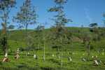 Sri Lanka  © Graham Crouch