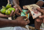 Betel nut sells for between 50 toea (20 cents) and 2 kina (80cents) each.  © Brian Cassey