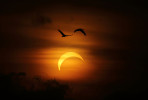 GLENN CAMPBELL - 14.11.2012 - Two Magpie Geese fly past the total Solar Eclipse over Ubirr Rock in Kakadu National Park.