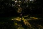 Sunlight through trees on a man holding a women woods.