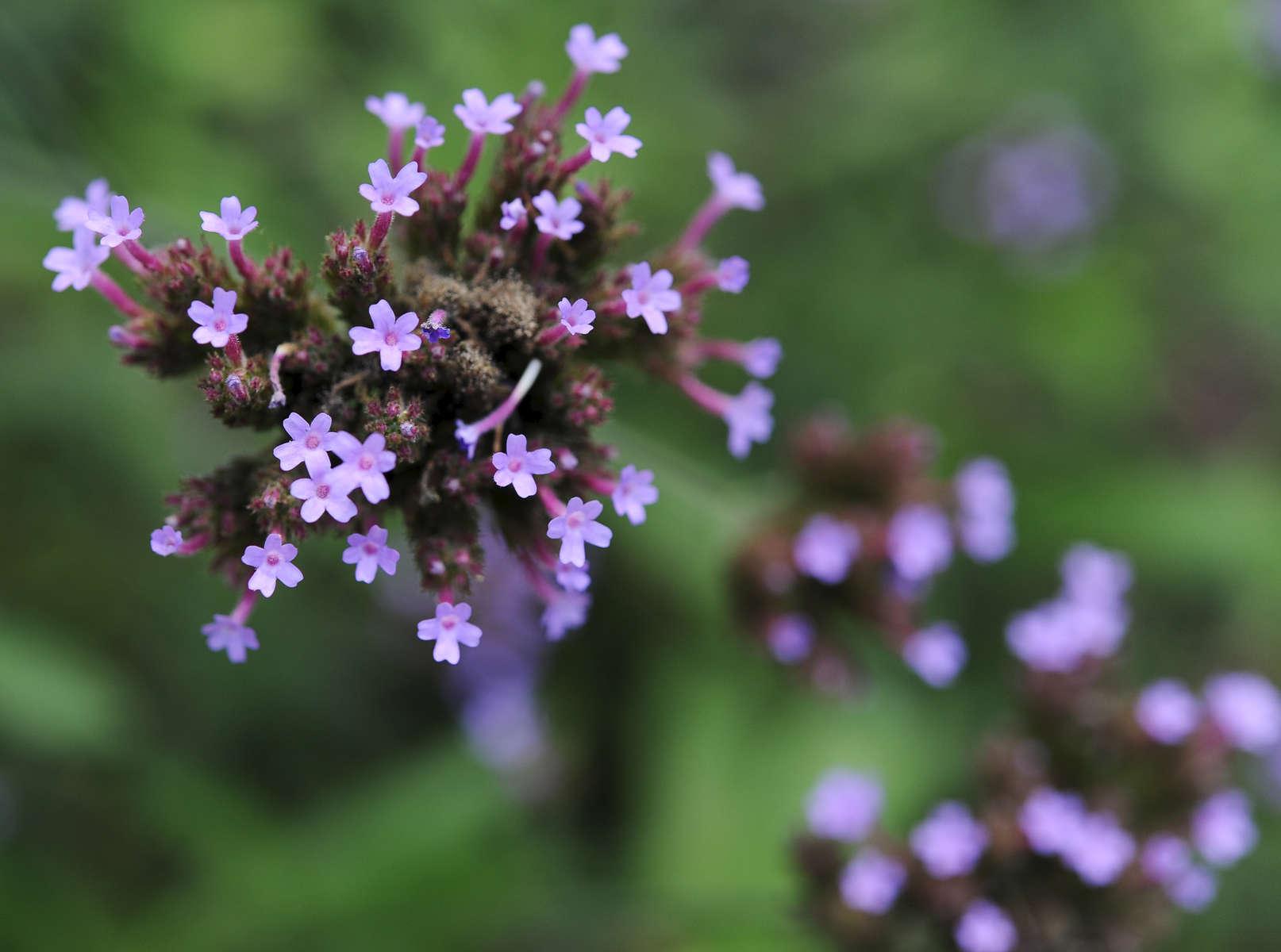 Cape-Cod-Lawn-Garden-Landscaping-Photographer-03