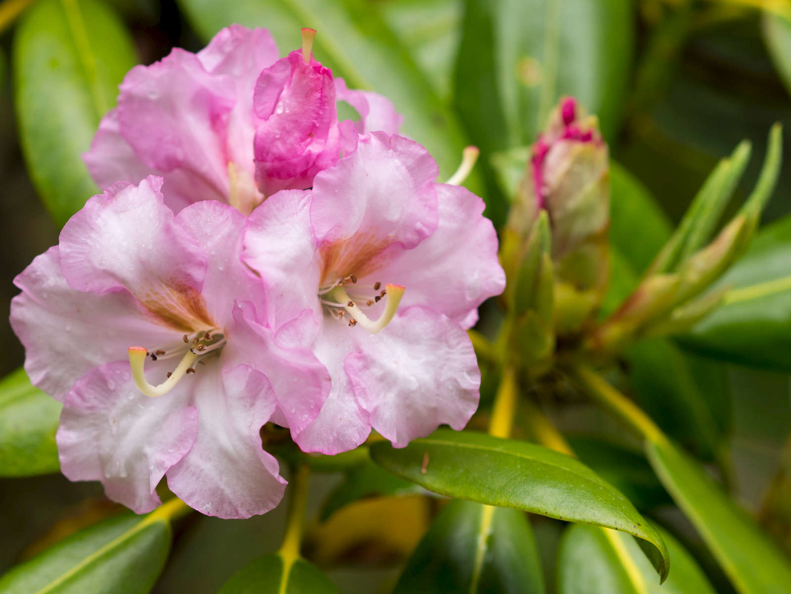 Cape-Cod-Lawn-Garden-Landscaping-Photographer-38