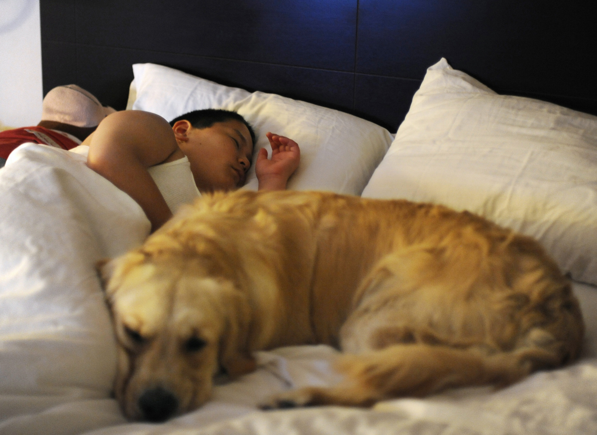 CONCORDIA, Kan. -- 06/20/11 -- Nickolas fast asleep with Keno by his side in his hotel room bed the night after the first day of training.