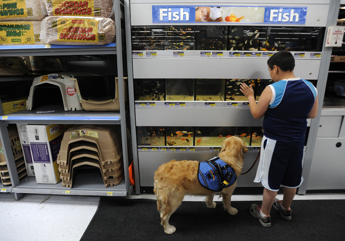 "CONCORDIA, Kan. -- 06/21/11 -- Nickolas and Keno check out the tropical fish on display at Wal-Mart during a training excursion. Tina and PJ were amazed at Nickolas's behavior during the experience. ""He didn't complain once about shopping, no meltdowns, no comments under his breath,"" Tina said about the experience. ""He had a distraction and redirection in Keno. He wasn't walking into us and invading our space."""