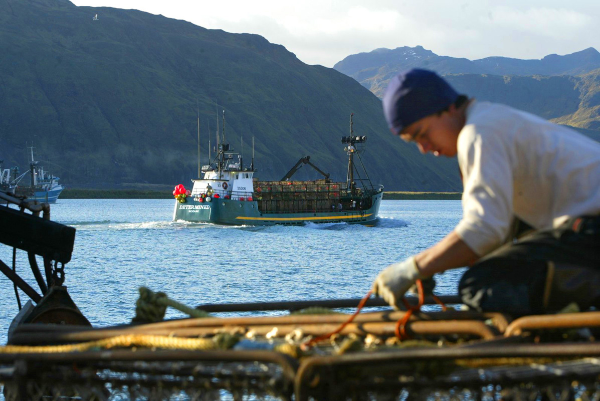 Wilfredo Ovalles, age 27, from Los Angeles, helps get the F/V Alaskan Beauty based out of Seattle,Wa ready to go red king crab fishing by tying down crab pots while the F/V Determined, based out of Kodiak,AK, passes by loaded with a stack of pots in Ducth Harbor, AK. © copyright Karen Ducey