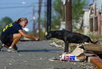 Animal rescuers from Pasados Safe Haven are photographed by photographer Karen Ducey as they save animals after Hurricane Katrina destroyed New Orleans in 2005. (© copyright Karen Ducey)