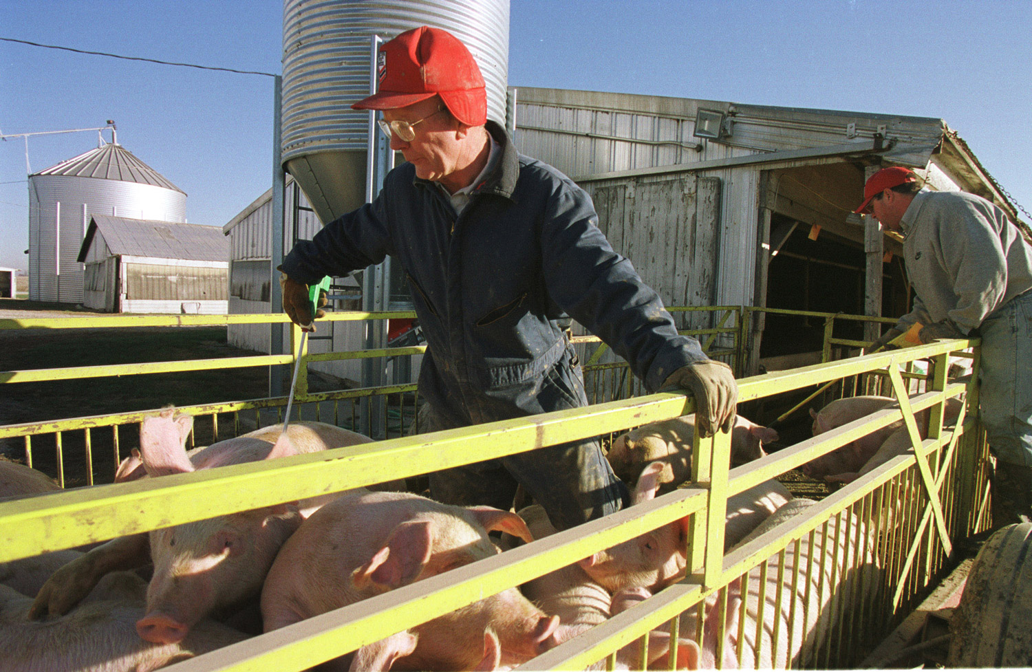 A pig farmer in Indiana. (© copyright Karen Ducey)