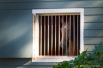 See My Magic: From a life in high heels to a life behind bars, published on Animal News Northwest. Writer, Photographer