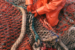 The F/V Alsea, a dragger, also known as a trawler, fishes for pollock in the Bering Sea. (© copyright Karen Ducey)