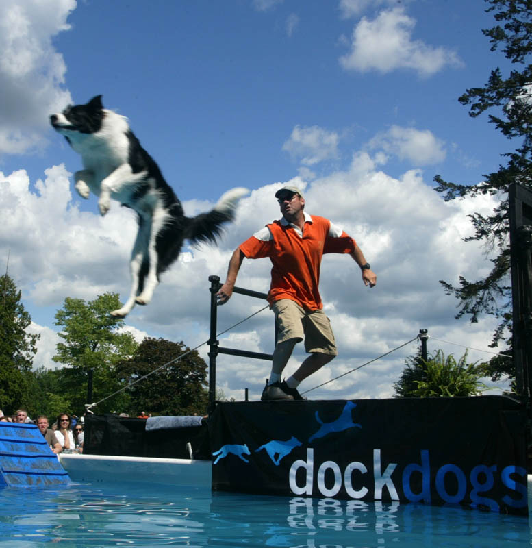 A border Collie flies through the air after a frisbee at a Dock Dogs competition. (© copyright Karen Ducey)