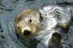 seal (© copyright Karen Ducey)