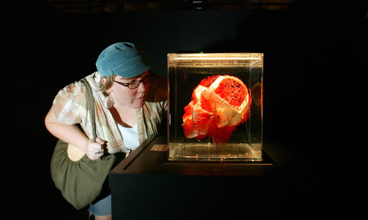 Lindy West from Where magazine in Seattle checks out a skull and arteries of the head during a preview for the press of Bodies: the Exhibition at 800 Pike St. in Seattle on September 26, 2006.(PI photo/Karen Ducey)