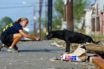 Pasados Safe Haven volunteer Jen Crotzer from Vail, CO, tries to coax a dog towards her as animal rescue efforts continue after Hurricane Katrina struck New Orleans on September 15, 2995.  © Karen Ducey