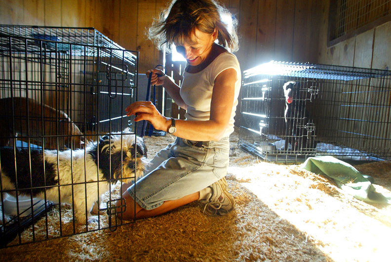 Rescued dogs were cared for by volunteers at the barn in the aftermath of Hurricane Katrina. (© copyright Karen Ducey)
