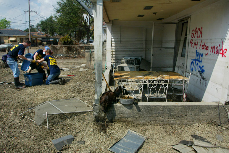 Volunteers from Pasados Safe rescue a dog from a home in New Orleans. A dead dog is on the porch on the right. © Karen Ducey