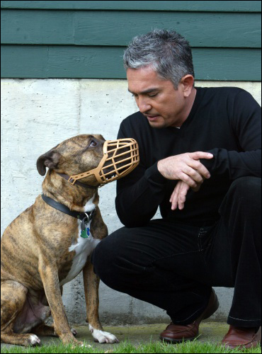 Cesar Milan meets with an aggressive pit bull who had been abused by its former owner. (© copyright Karen Ducey)