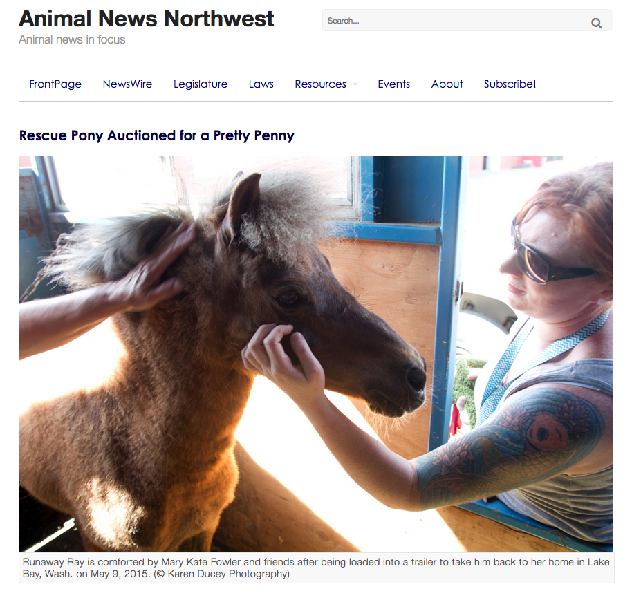 Rescue Pony Auctioned for a Pretty Penny.  Story and photos for Animal News Northwest, May 31, 2015