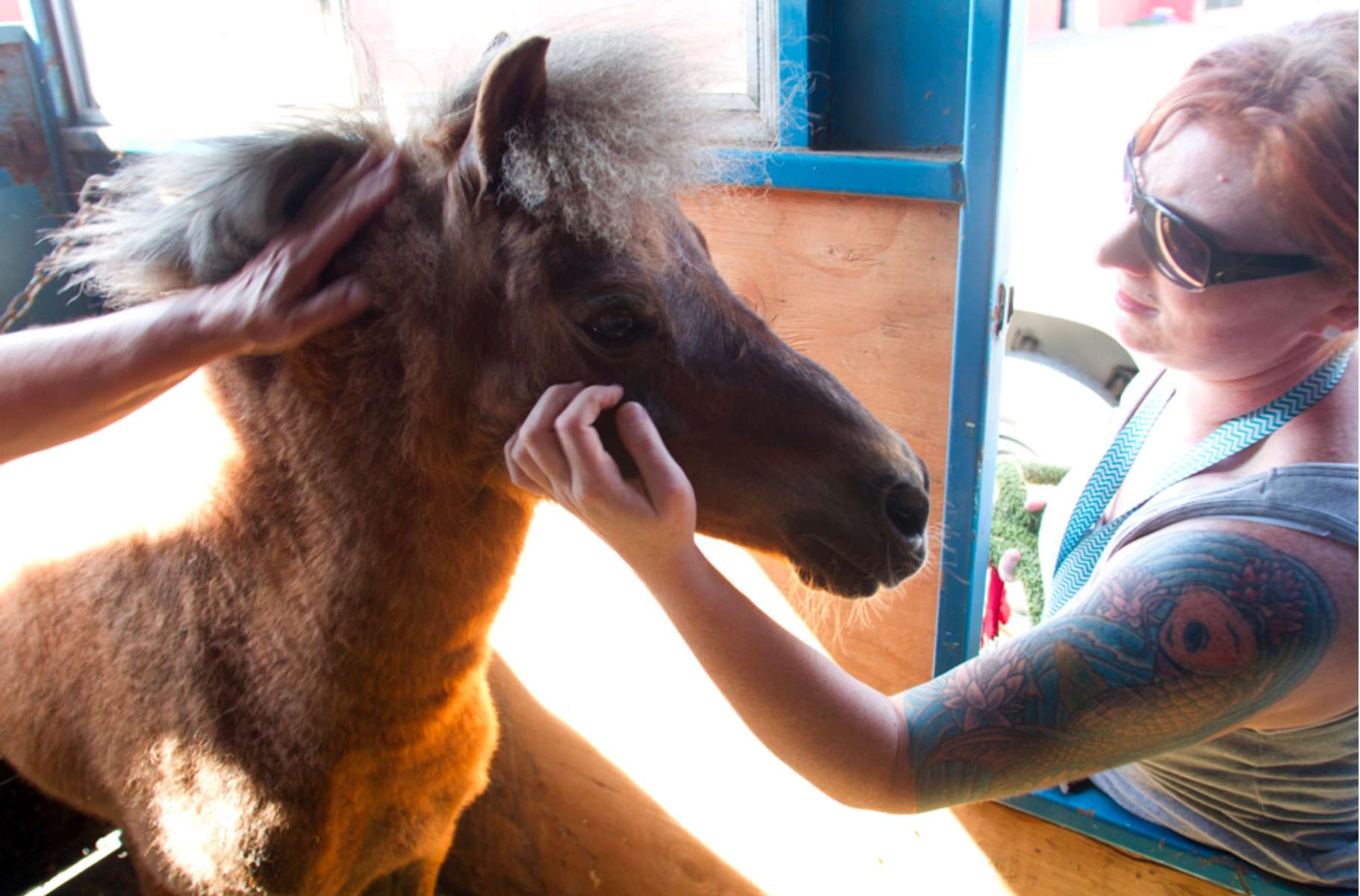 Rescue Pony Auctioned for a Pretty Penny, Writer and Photographer.  published on Animal News Northwest. This story was used by state legislator Rep. Michelle Caldier to change the laws for rescued animals in Washington state (House bill 2500). It also won first place won a first place writing award in the daily print and online small publication category for short feature story in the Excellence in Journalism awards.