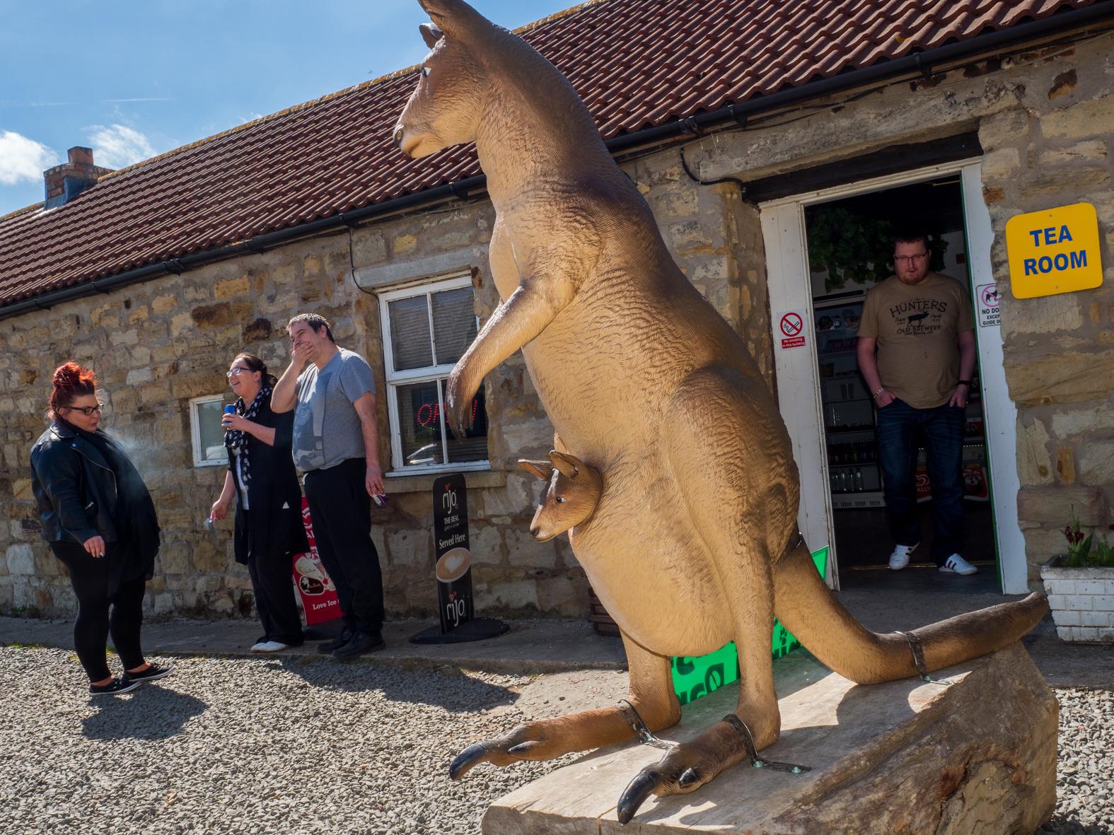 Entrnce to the tea room at Esshottheugh Animal Park. Morpeth, Northumberland.