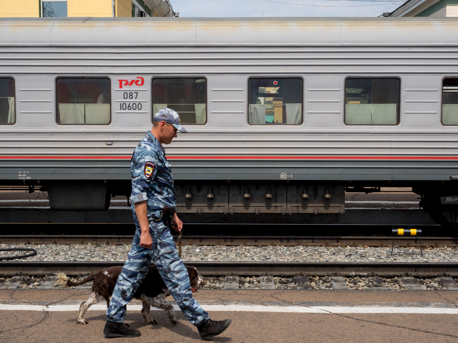 A police sniffer dog patrols a station platform during a stop on the Trans-Siberian Railway from Moscow-Vladivostok. Spanning a length of 9,289km, it's the longest uninterrupted single country train journey in the world. It has connected Moscow with Vladivostok since 1916, and is still being expanded. It was built between 1891 and 1916 under the supervision of Russian government ministers personally appointed by Tsar Alexander III and his son, the Tsarevich Nicholas (later Tsar Nicholas II).