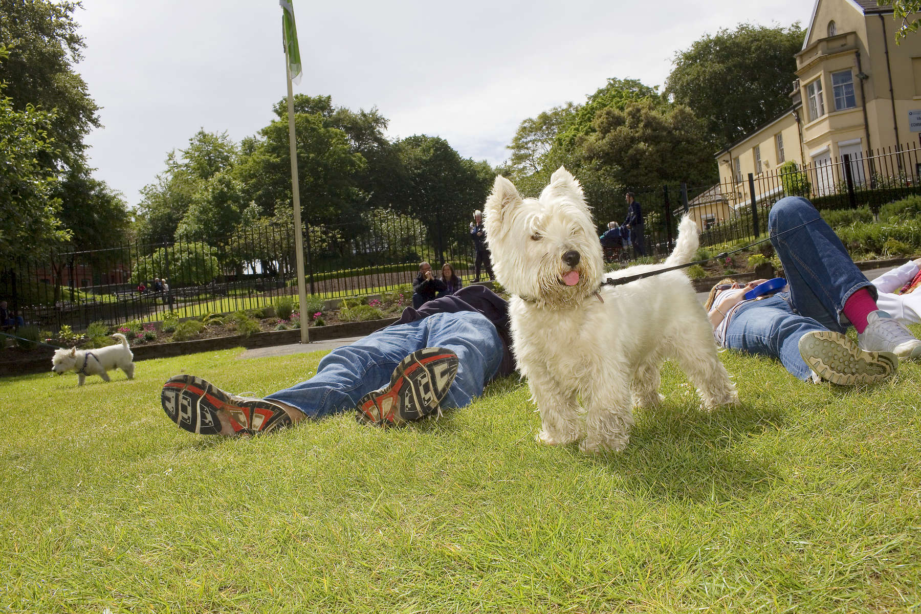 A white Westie dog in Vale Park, New Brighton.In 1986, world famous photographer Martin Parr published his book 'The Last Resort,' a set of photographs taken over three seasons 1983-85 in the Liverpool suburb of New Brighton. 25 years later, photographer and Parr fan, Peter Dench, went on a Bank Holiday pilgrimage to New Brighton to walk in Parr's footsteps and document what has changed or remained the same in the seaside town.