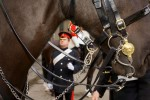 household_cavalry_49