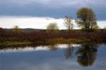 LandscapeOct03-29Adj1-TreesRiver