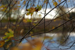 LandscapeOct03-34Adj1-Leaves