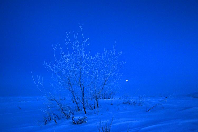 FrozenPlantArcticMoon