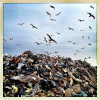 Rockaway Beach, NY | November 8, 2012 Hungry seagulls congregate around a massive debris dump made up of the remnants of Rockaway Beach homes.